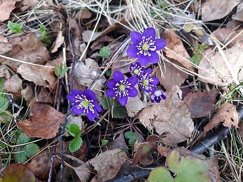 Kevätretki Ruissaloon